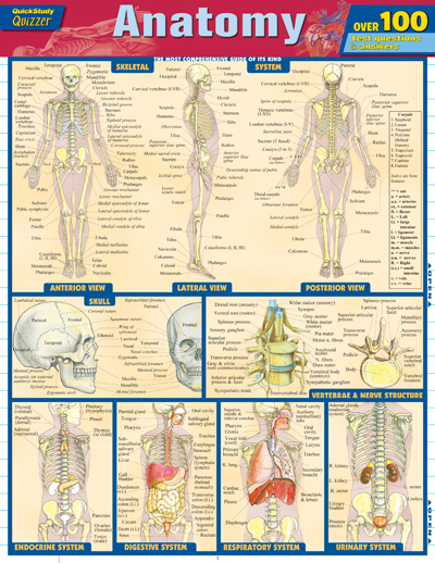 Image For Quick Study<br>Anatomy Quizzer