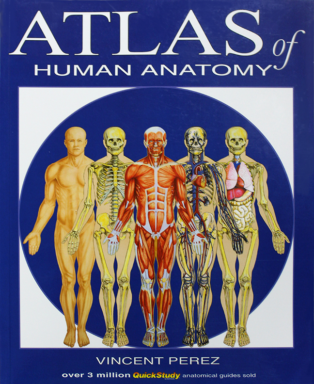 Image For Atlas of Human Anatomy<br>Vincent Perez