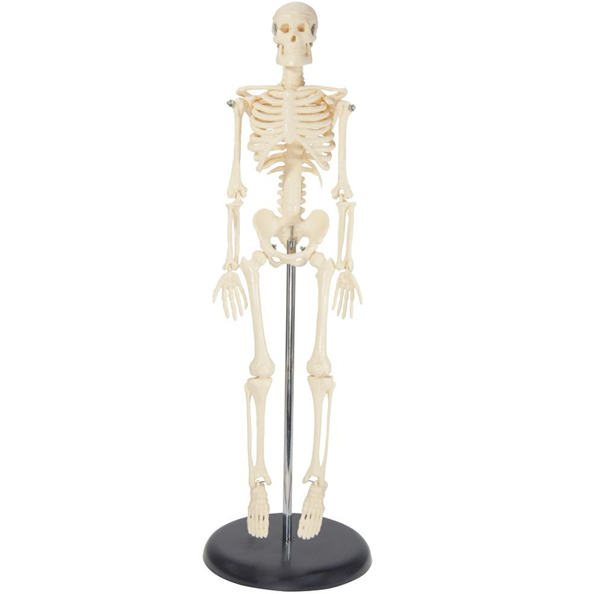 Image For Tiny Tim<br>My First<br>Skeleton 16 ½""