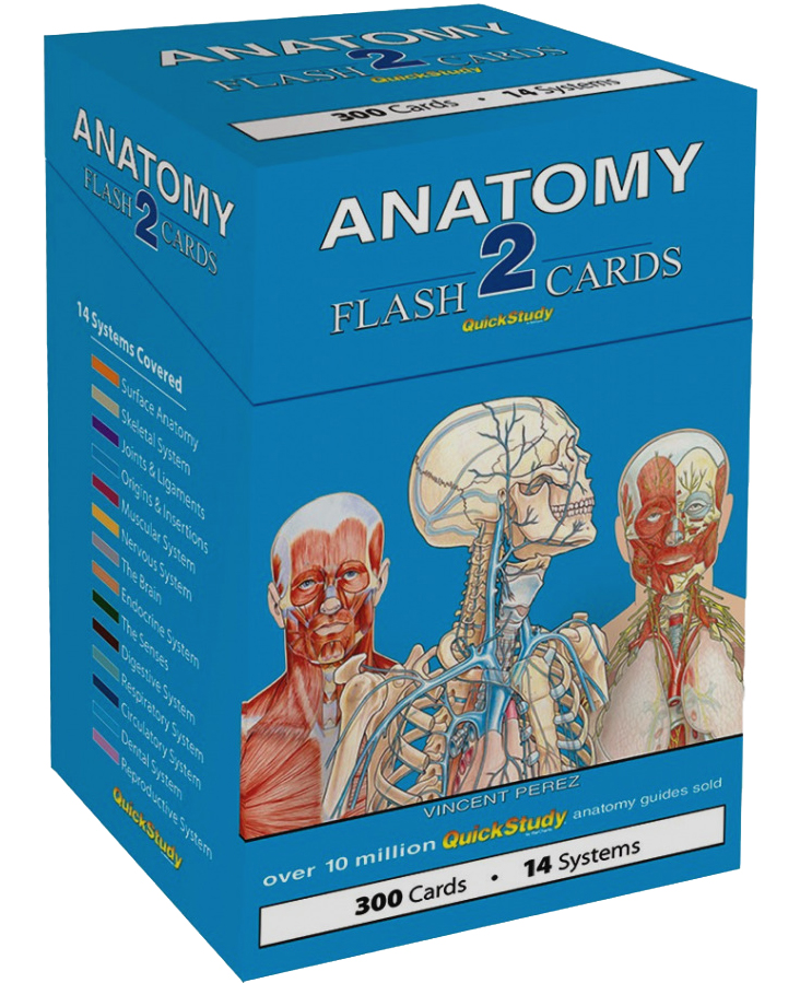 Image For Anatomy 2<br>Flash Cards