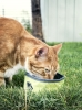 Cover Image for Collapsible Pet Bowl